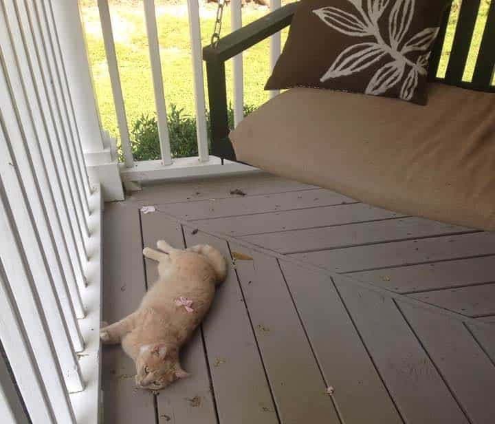 cat laying on porch