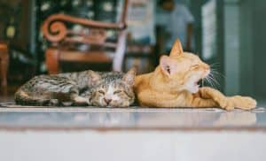 two cats laying down, one yawning