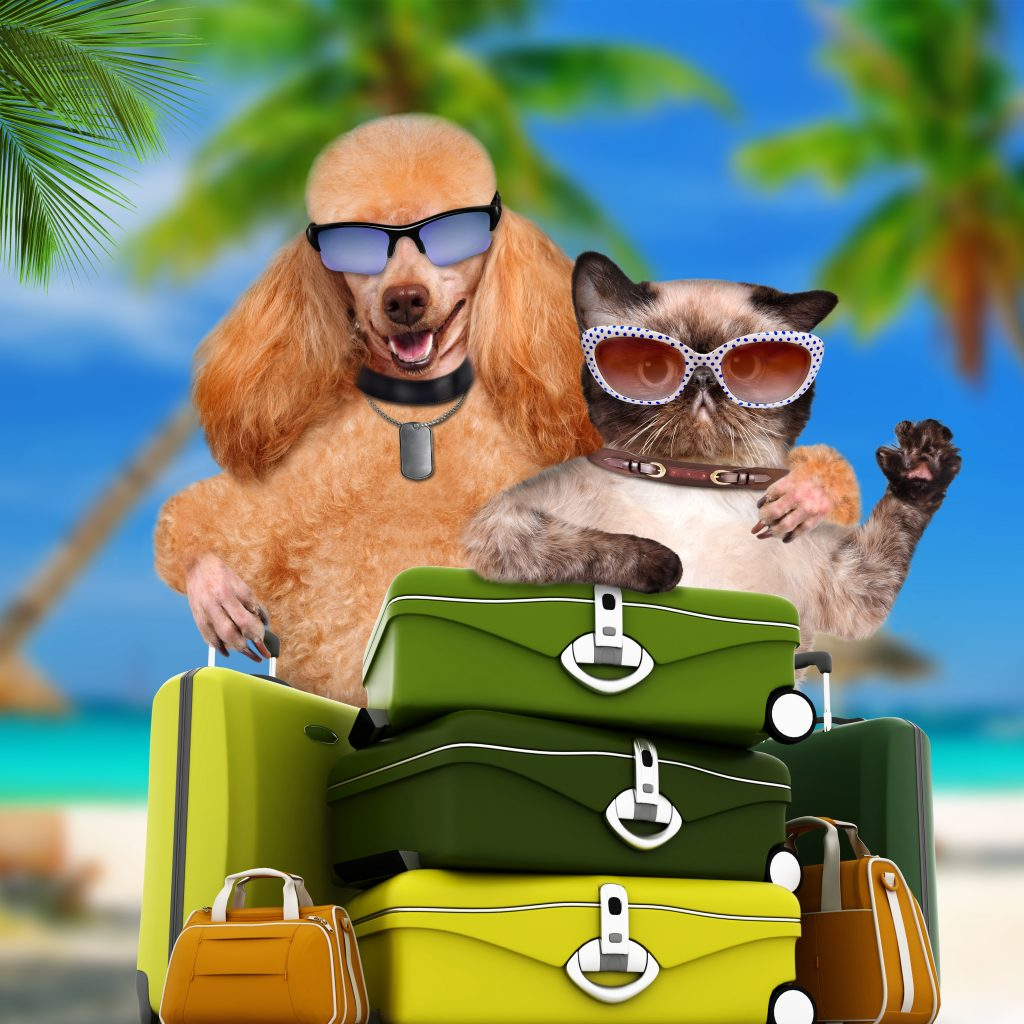 Dog and cat travelers with suitcases