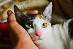 Person's Left Hand Holding Calico Cat