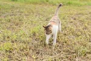 kitty on the grassland, domestic cat in the outdoor