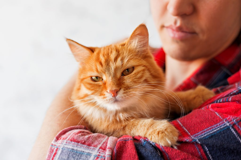 Man in red plaid tartan shirt holding an arrogant ginger cat.