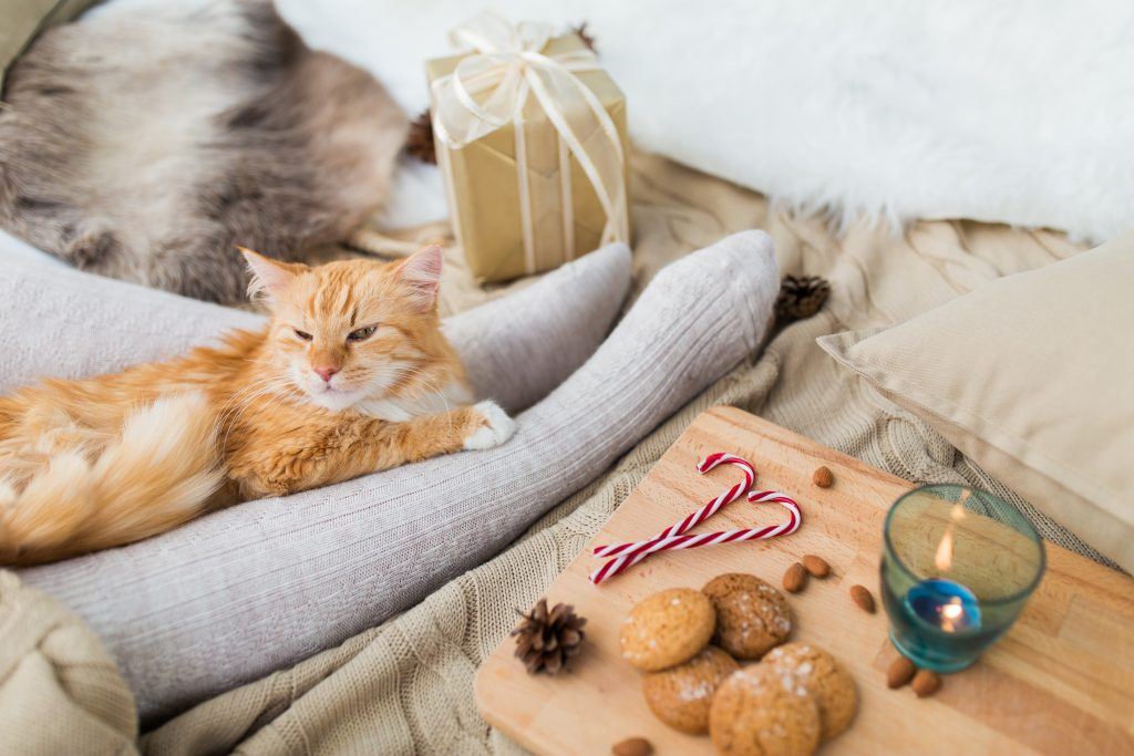 red cat lying on owner feet in bed at christmas