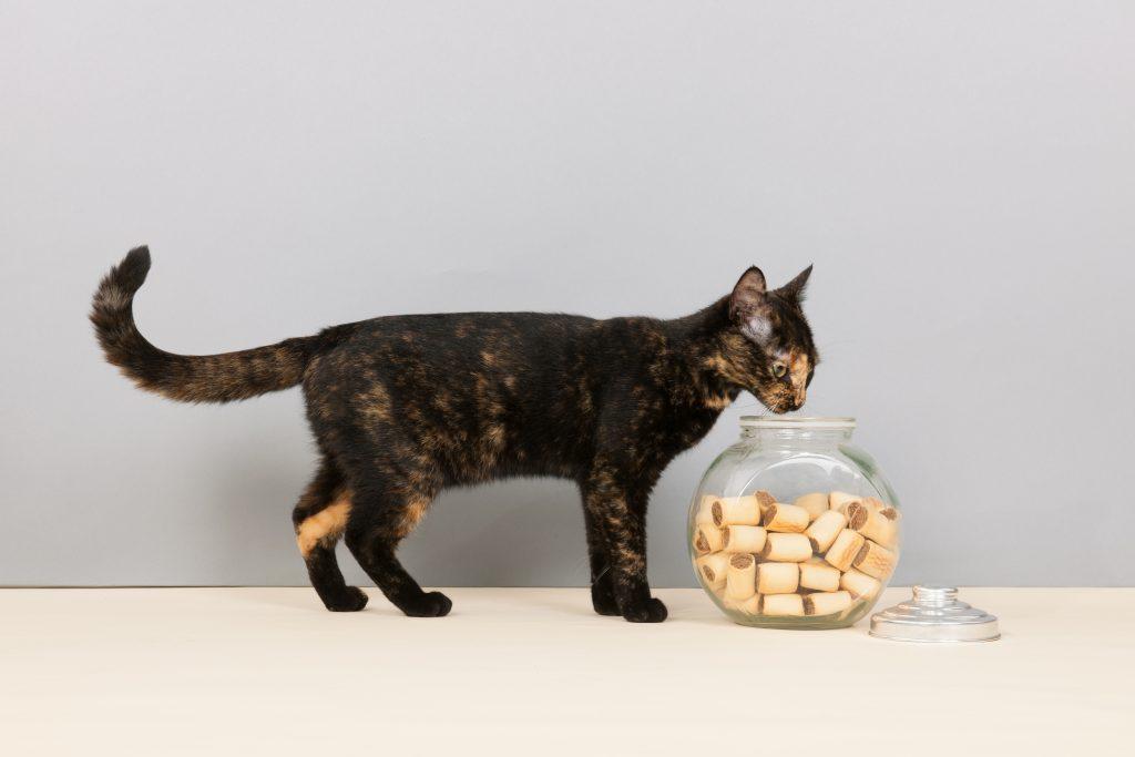 Tortoiseshell cat with bowl cookies in studio