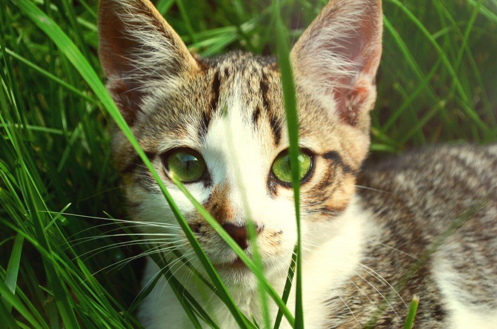 Cat Hiding on Grass