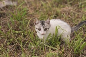 little cat walk and play on the grassland