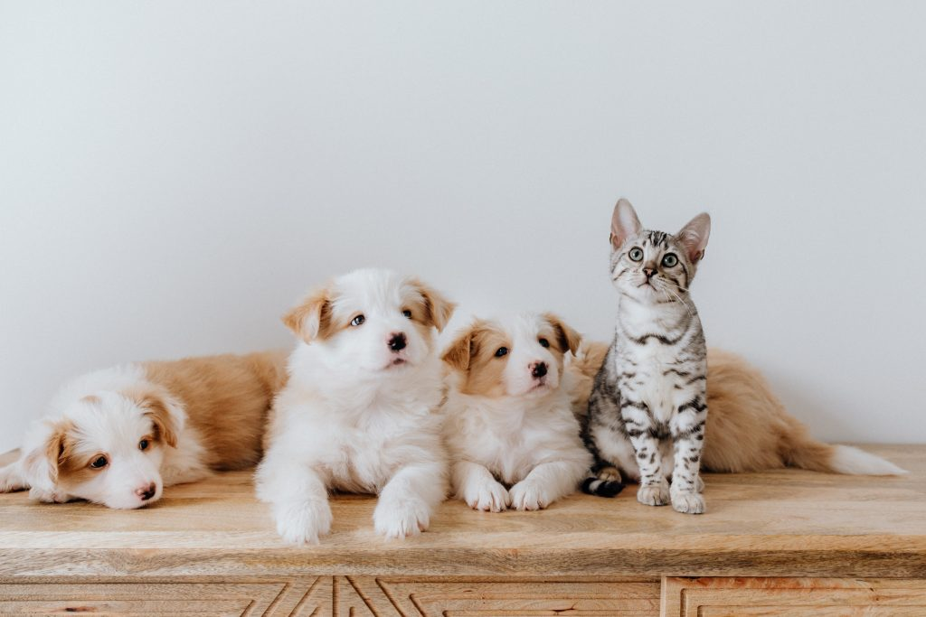 Cute Cat and Dogs on Wooden Table