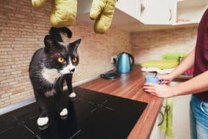 Man with curious cat in kitchen