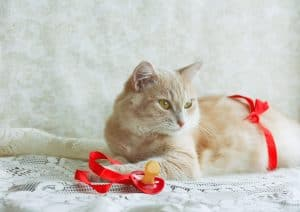Pregnant ginger cat with red ribbon bow, pacifier, indoors
