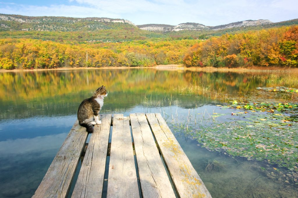Calm lake with cat sitting on old wooden pier and autumnal hills in background.