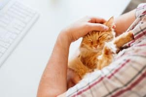 Happy cute ginger cat lying on the desk next to the keyboard. Man strokes sleeping pet. Cozy morning at home.