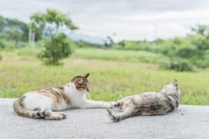two cat family, young kitty and her mother in the outdoor
