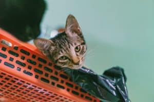 Brown Tabby Cat Lying on Plastic Rack